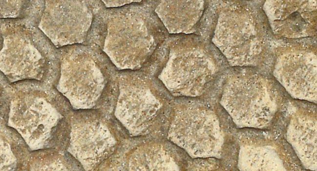 Colección Icnofósil 3D – Cruziana