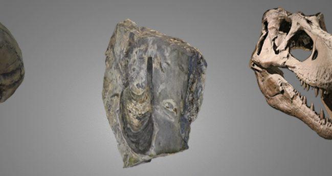 La Colección Paleontológica