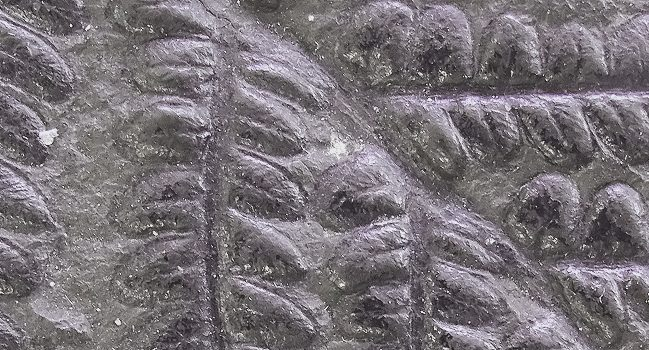 Paleobotánica 3D